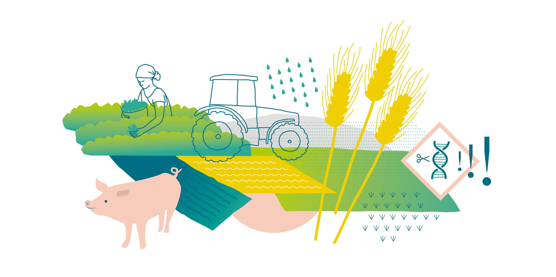 FUE-illustrationen-landwirtschaft_clarahuesch